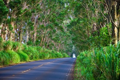 Tree tunnel linking the east side of Kauai to Koloa and Poipu